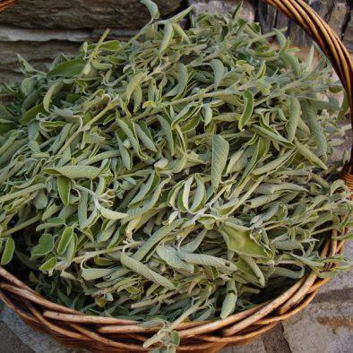 basket-with-sage