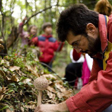 mushroom-foray-01