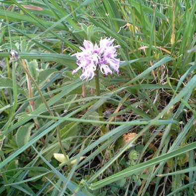 orchids_17