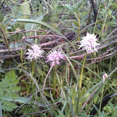 orchids_21