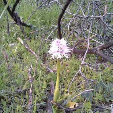 orchids_23