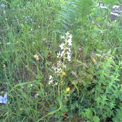 orchids_24