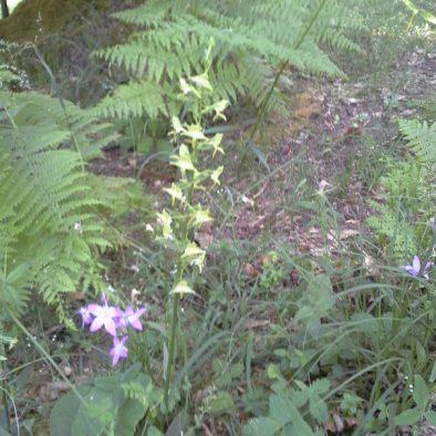 orchids_26
